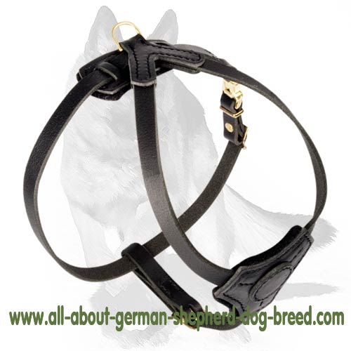 'Tango' Small Leather Dog Harness for German Shepherd Puppy