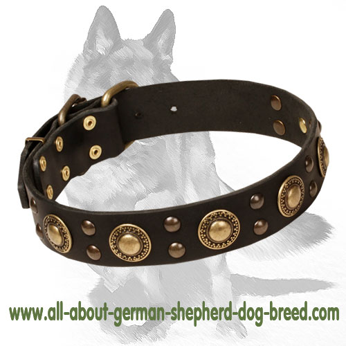 German Shepherd Brass Decorated Leather Dog Collar
