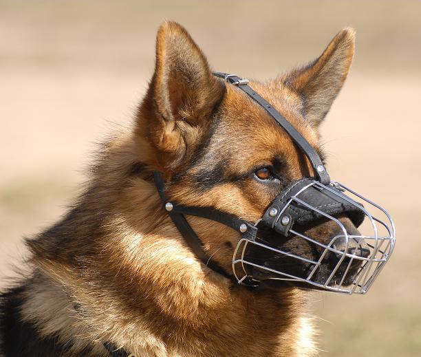 Shepherd Basket Wire Dog Muzzle GSD_LRG wire basket dog muzzle german shepherd german shepherd dog wire dog harness at bayanpartner.co