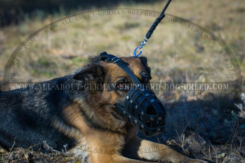 'Mon Amie' - Lightweight German Shepherd Muzzle for Everyday Use