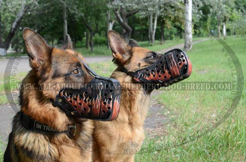 Do Muzzles Teach Dogs Not To Bite