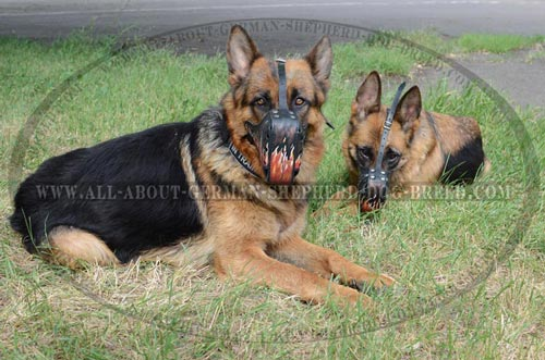 Non-toxic handpainted Dog Muzzle
