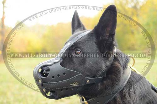 Padden on nose leather muzzle