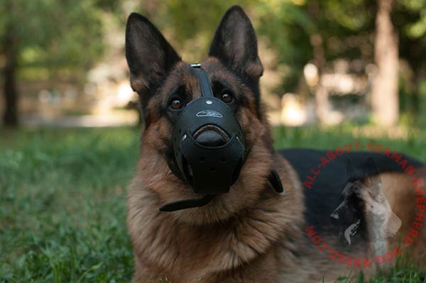Durable leather German Shepherd muzzle