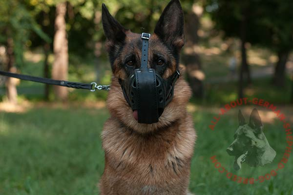 Time-proof leather German Shepherd muzzle