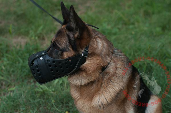 Padded with felt leather German Shepherd muzzle