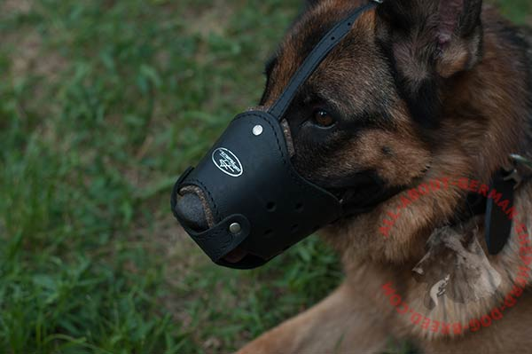 Reliable leather dog muzzle for German Shepherd