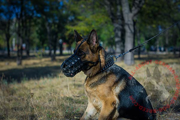 Riveted basket-like leather dog muzzle for German Shepherd