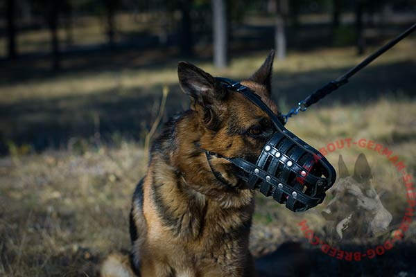 Hand stitched leather dog muzzle for German Shepherd