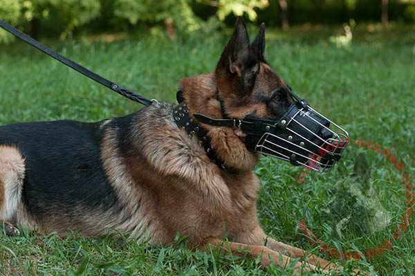 Wire basket German Shepherd muzzle with comfy leather lining on nose