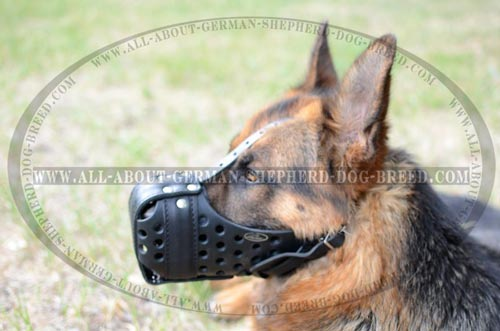 Reliable leather dog muzzle with holes for breathing