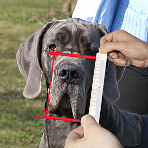How to measure your dog for best fit Muzzle